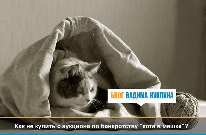 5Как-не-купить-с-аукциона-по-банкротству-кота-в-мешке